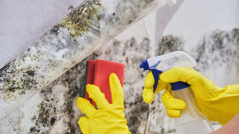 Mold Remediation: Finding the Root Cause of Mold in Your Home